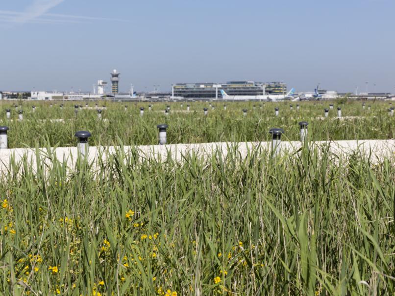Marais filtrant à Paris-Orly