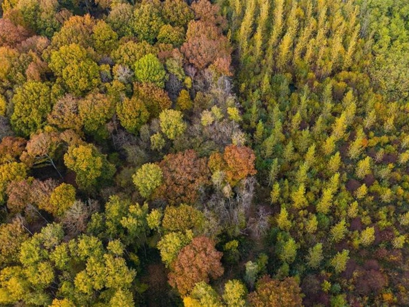 Forêt type