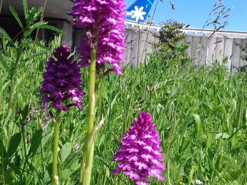 Les trois variétés d'orchidées sauvages qui poussent sur la plateforme